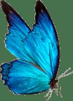 Création Site Web Jura - Cerf à Lunettes - Com & Web_butterfly
